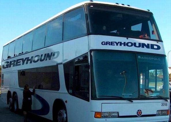 американские автобусы