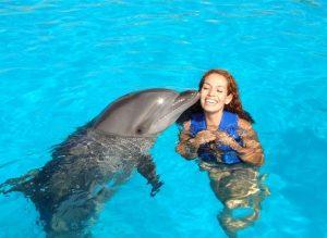 гавайи дельфины