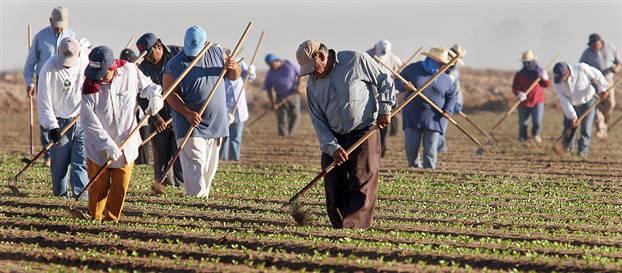 мексиканцы на работе фото