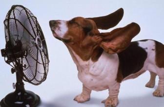 Лето в Америке и последствия аномальной жары